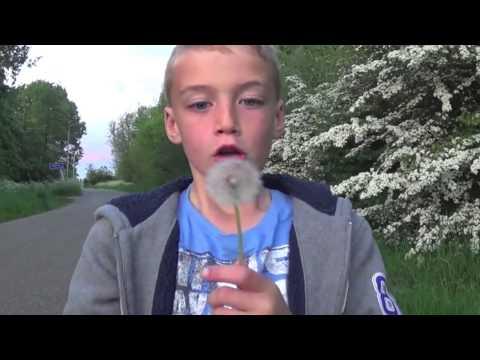 Dandelion Blowing Fun with the Seeds - paardebloem