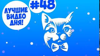 Лучшие Видео дня! #48 Счастья, здоровья!(Новый канал - https://goo.gl/ZQAEsi., 2015-12-24T15:54:59.000Z)