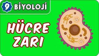 Hücre Zarı   9.Sınıf Biyoloji