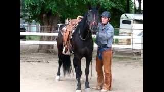 Bucking Stock Rescue,'Toothless' 1st ride, Sean Davies,coloradoreinsman