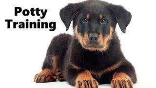 How To Potty Train A Beauceron Puppy - Beauceron House Training Tips - Beauceron Puppies