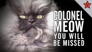 R.I.P. COLONEL MEOW, YOU WILL BE MISSED