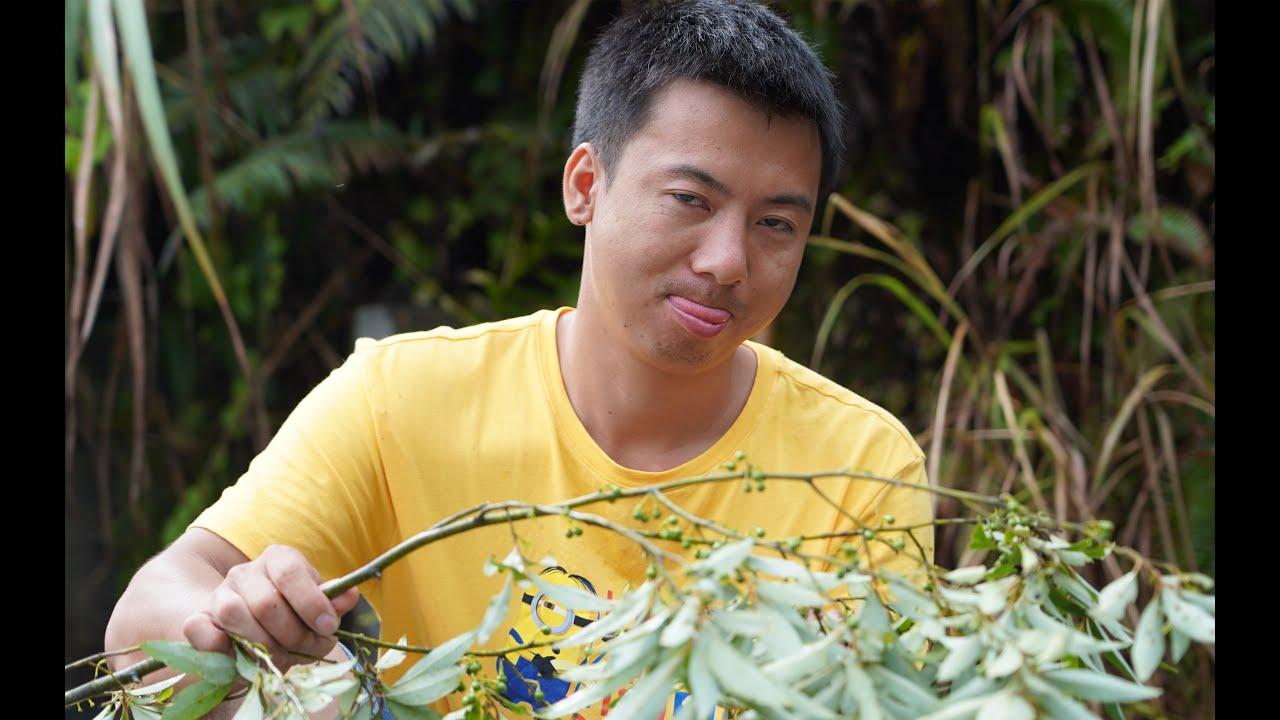 华农兄弟:搞了点田螺,砍点野胡椒一起炒,味道还可以哟