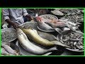 Alive & Fresh Fish Market in Dhaka Bangladesh | Lots of Fresh Country Fishes Available