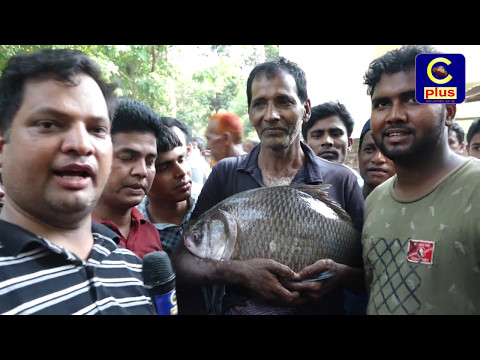 Wild Fish catching with lots of fun by hand net from dighi Raozan, Gahira