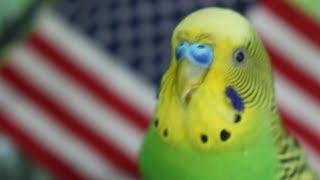 Самые Смешные Попугаи. Подборка приколов #8
