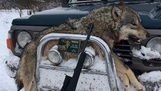 Охота на волка 2018 / Карабин CZ 557 кал. ТАХО 30-06 / Промазал лису