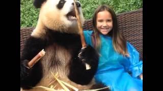china chengdu photo with panda