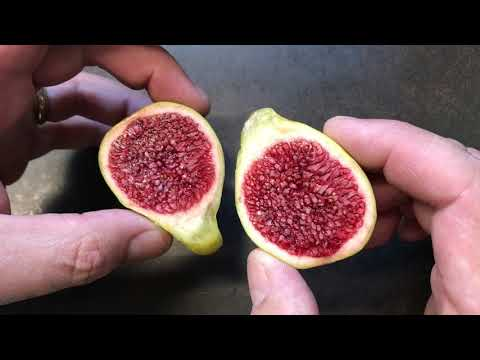 french fig farm: Col de Dame Blanc