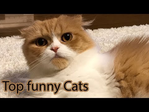 Top Funny Cats Videos Compilation 2017 #12 🐱 Best Funny Cat Fails