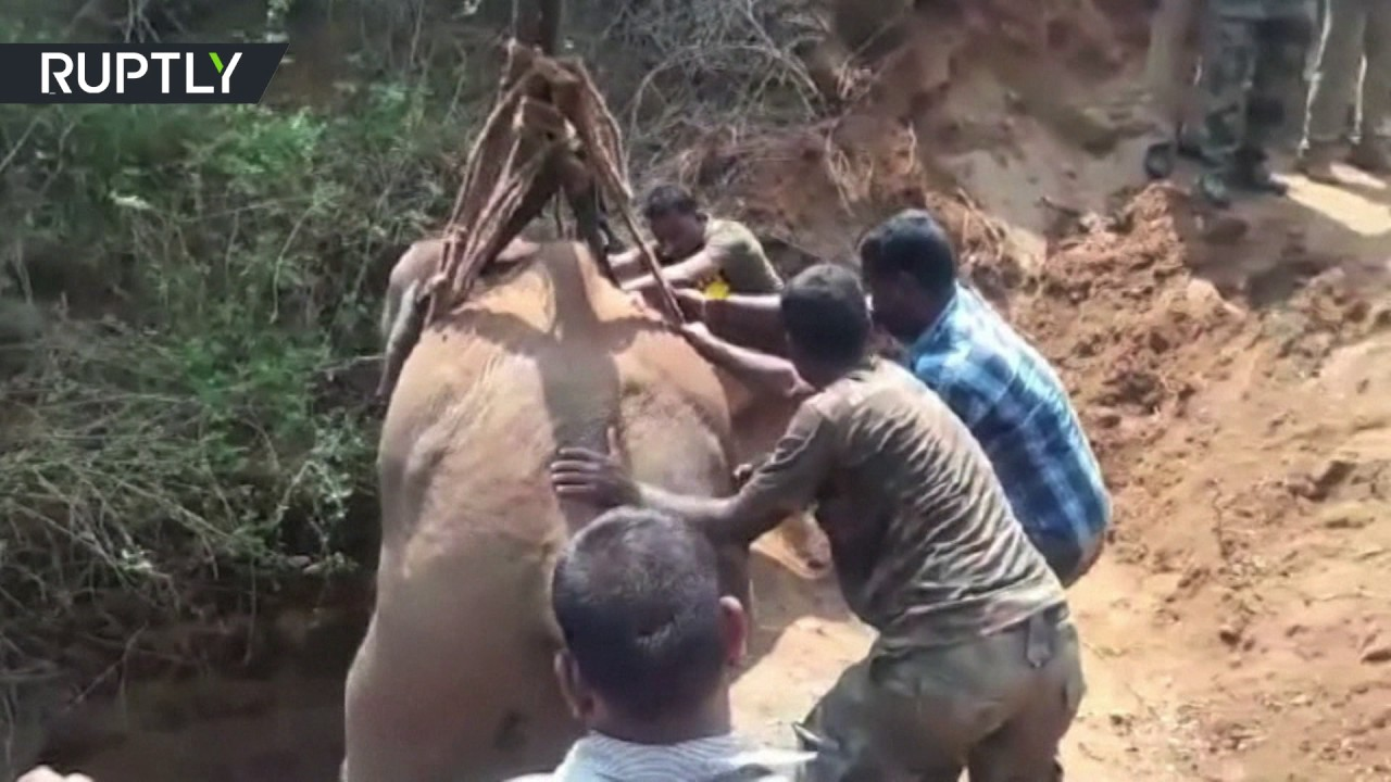 Elephant rescued from 21-meter deep well in India