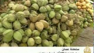 زراعة مائة الف شجرة جوز الهند في سلطنة عمان Youtube