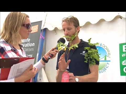Festival of Nature 2017 - Live Interview – The Woodland Trust