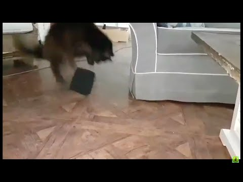 Maine-coon Is A Little Scared