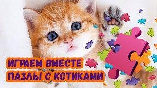 Пазлы котиков. Играем вместе. Собираем пазлы. Puzzles Kitten