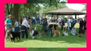 Dog Day In The Park In Grand Rapids, Michigan