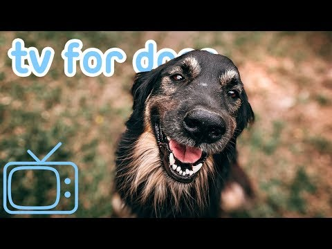 TV for Dogs! 8 HOURS of Fun Entertainment for Bored Dogs + Music! NEW