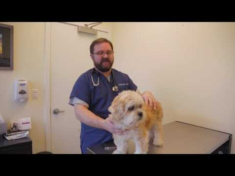How To Give A Dog (or Cat) an Insulin Shot