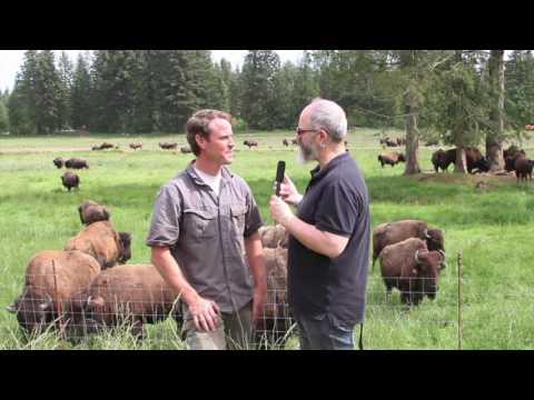 Island Bison Farm