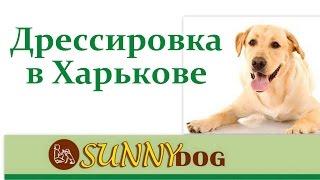 Дрессировка собак в Харькове. Обучение собак. Дрессировка щенка Харьков