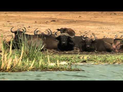Trip to Congo/Rwanda and Uganda. Part II