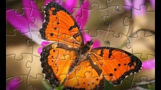 Butterfly Puzzle Game for Kids - Butterfly