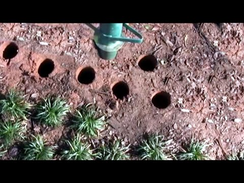Covering Tree Roots With Groundcover Doovi