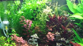 40 gallon long planted aquarium update 4