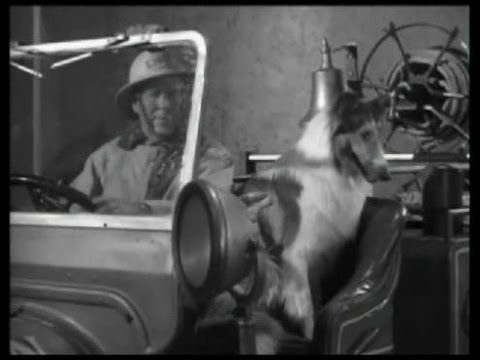 "Download Lassie - Episode #264 - ""Lassie Adopts the Fire Chief"" - Season 8 Ep. 9 - 11/05/1961"