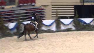 Gingersnap At Maef 2014 Novice 1st Trip
