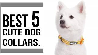 Cute Dog Collars For Boy And Female Dogs || The Best 5 Cute Dog Collars In 2019