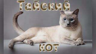 Тайский кот: нераскрытая тайна