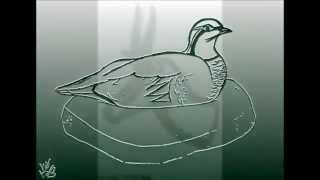 Realistic drawings animals - Dibujos animales realista