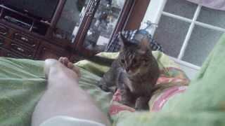 Кошка не дает спать