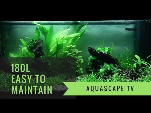 Planted Aquarium Easy Maintenance Layout