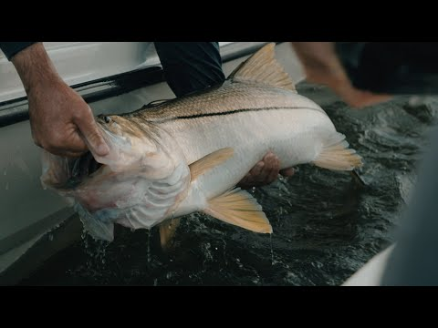 Unfathomed - Giant Snook Fishing In Stuart