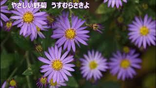 野菊(童謡・唱歌)合唱 ♪♪COVER(アカペラ)