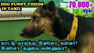 நாட்டு நாய்க்கு இவ்ளோ அறிவா? இவ்ளோ குறும்பு பண்ணுமா? | Dogs Funny Videos in Tamil