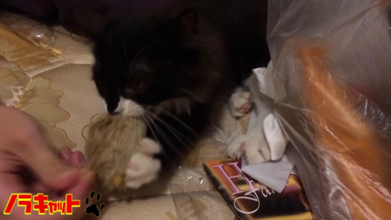 絶対に渡さないぞ!!黒ネコの可愛い反抗