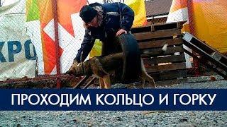 Дрессировка собак - снаряды горка и кольцо | Фонд Умка