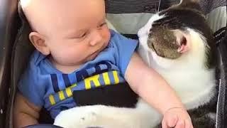Cats love Infants