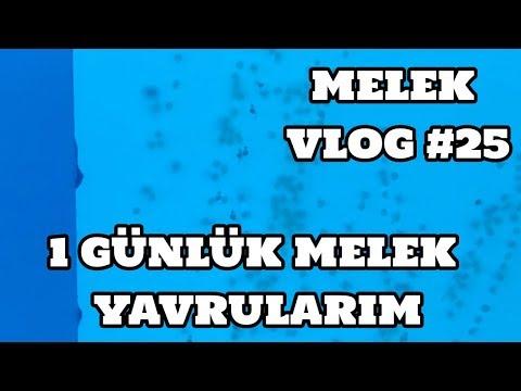 Melek Vlog #25 (1 Günlük Melek Yavrularım)