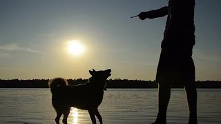 Man And Dog Playing Stock Video