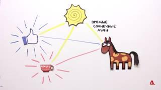 Рассеянный свет   Физика в опытах и экспериментах