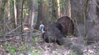 Madison County, MS Turkey Hunt