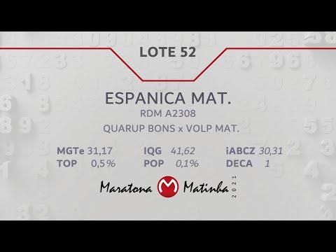LOTE 52 Maratona Matinha