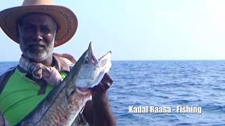 DOLPHIN FISHING (Mahi-Mahi, King mackerel) Ever Caught