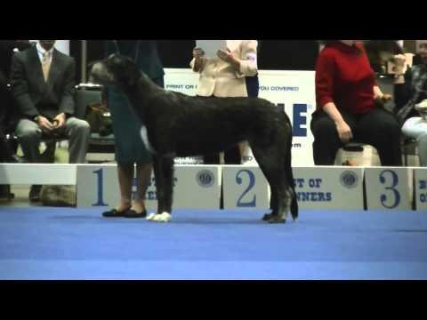 12-13-2014 Part 3 of 3 Eukanuba National Championship - Irish Wolfhounds