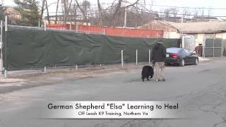"German Shepherd ""elsa"" During Her Heel Lesson! Dog Training In Northern Virginia"