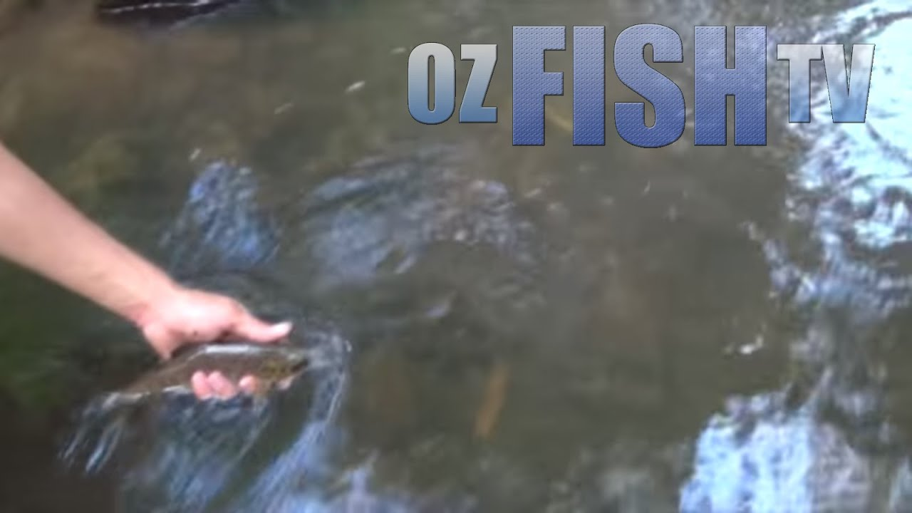 Download Oz Fish TV Season 3 Episode 11 - Stream Trout, Kayaks, and Beach Worms